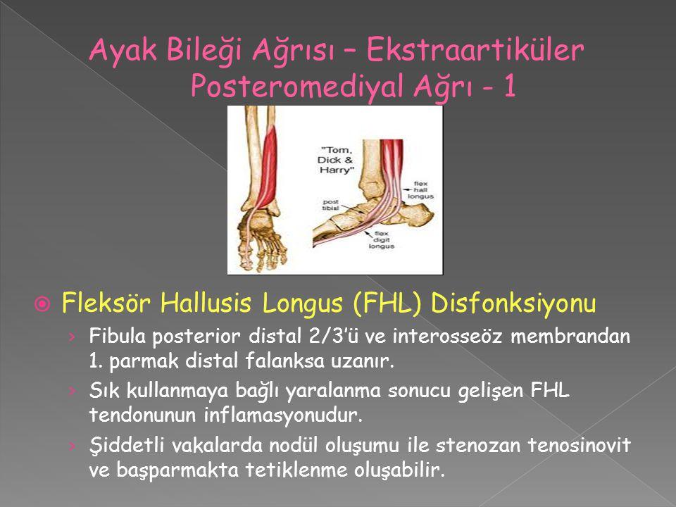  Fleksör Hallusis Longus (FHL) Disfonksiyonu › Fibula posterior distal 2/3'ü ve interosseöz membrandan 1. parmak distal falanksa uzanır. › Sık kullan