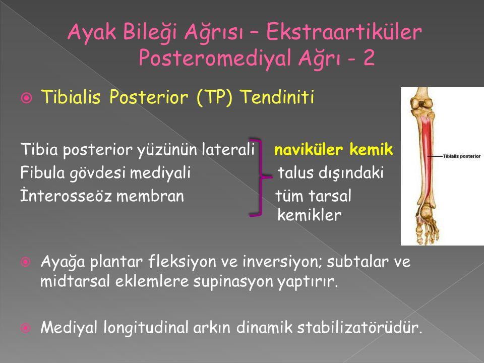  Tibialis Posterior (TP) Tendiniti Tibia posterior yüzünün laterali naviküler kemik Fibula gövdesi mediyali talus dışındaki İnterosseöz membran tüm t