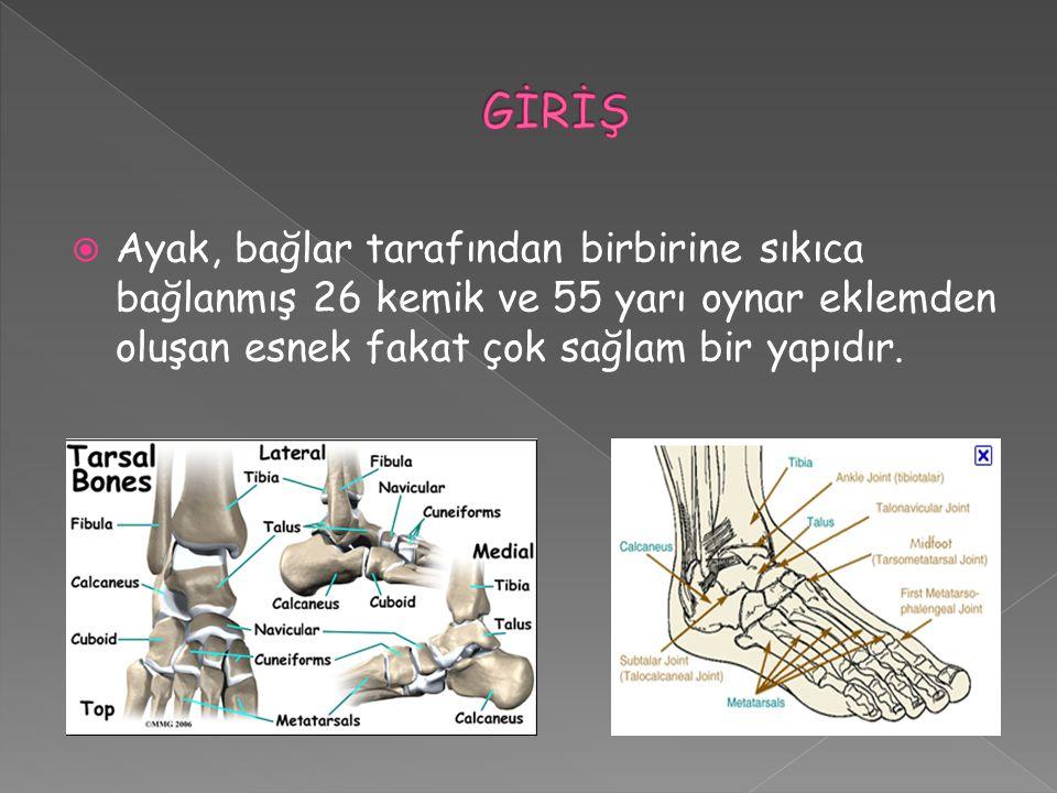  Ayak, bağlar tarafından birbirine sıkıca bağlanmış 26 kemik ve 55 yarı oynar eklemden oluşan esnek fakat çok sağlam bir yapıdır.