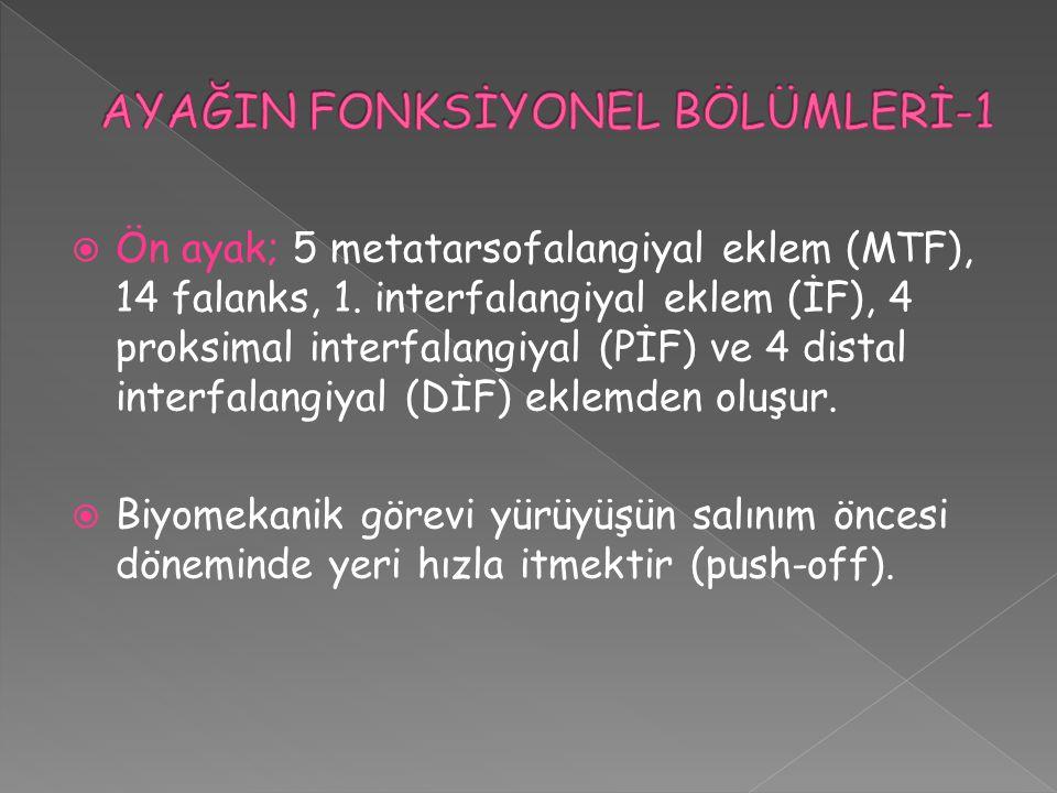 Ön ayak; 5 metatarsofalangiyal eklem (MTF), 14 falanks, 1. interfalangiyal eklem (İF), 4 proksimal interfalangiyal (PİF) ve 4 distal interfalangiyal