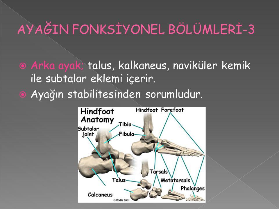  Arka ayak; talus, kalkaneus, naviküler kemik ile subtalar eklemi içerir.  Ayağın stabilitesinden sorumludur.