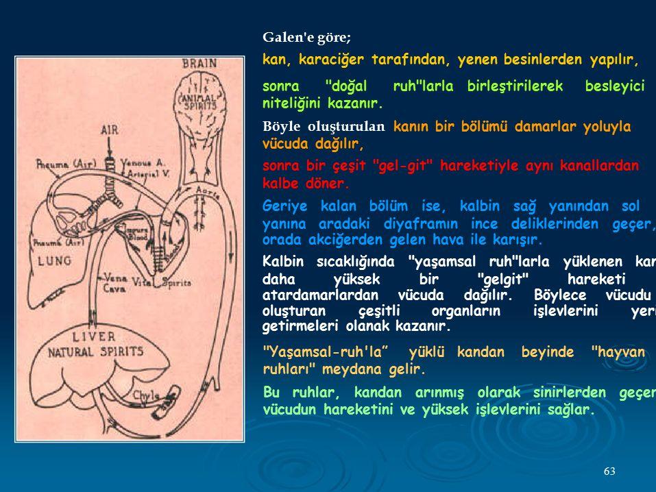 Galen'e göre; kan, karaciğer tarafından, yenen besinlerden yapılır, sonra