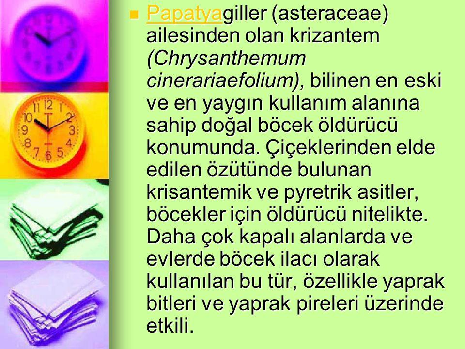 Papatyagiller (asteraceae) ailesinden olan krizantem (Chrysanthemum cinerariaefolium), bilinen en eski ve en yaygın kullanım alanına sahip doğal böcek öldürücü konumunda.