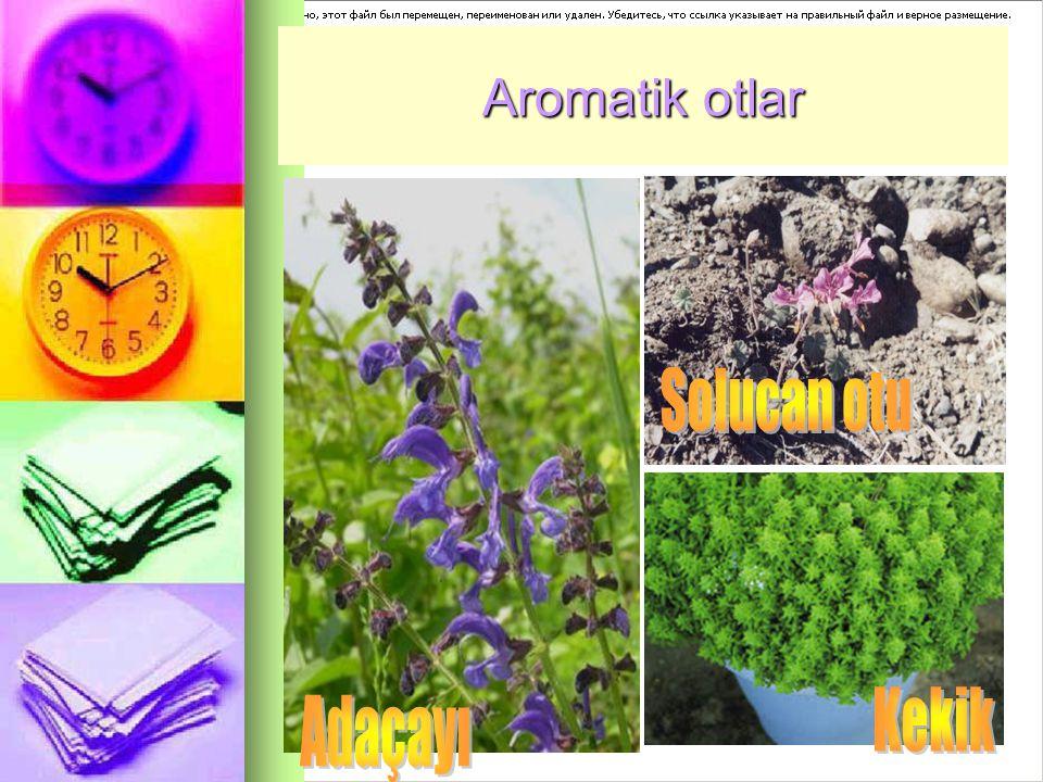 Aromatik otlar