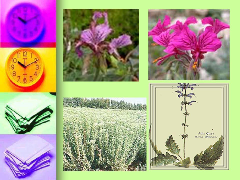 Bu amaçla Sage(adaçayı), Tansy(solucan otu), Thyme (kekik) gibi bitkiler kullanılmaktadır.