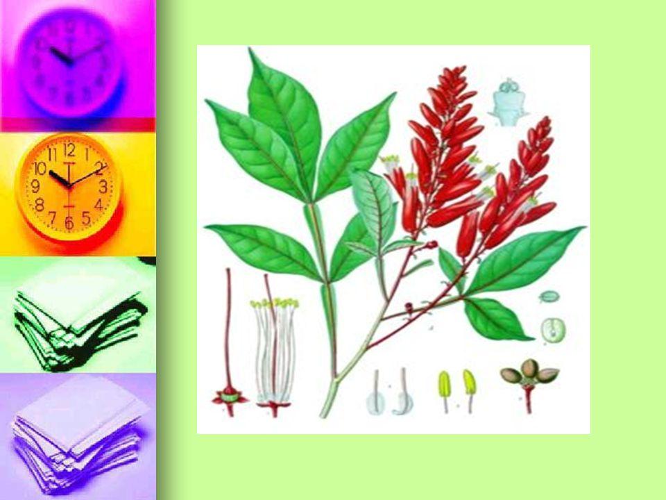 PELİN (Artemisia) Bir ölçü çok çok acı biber, Bir ölçü pelin( artemisia) yaprağı, 6 ölçü su Biber ve pelin birlikte parçalanır ve suya konulur, Biraz kaynatılır, soğumaya ve çökelmeye bırakılır, süzülür.