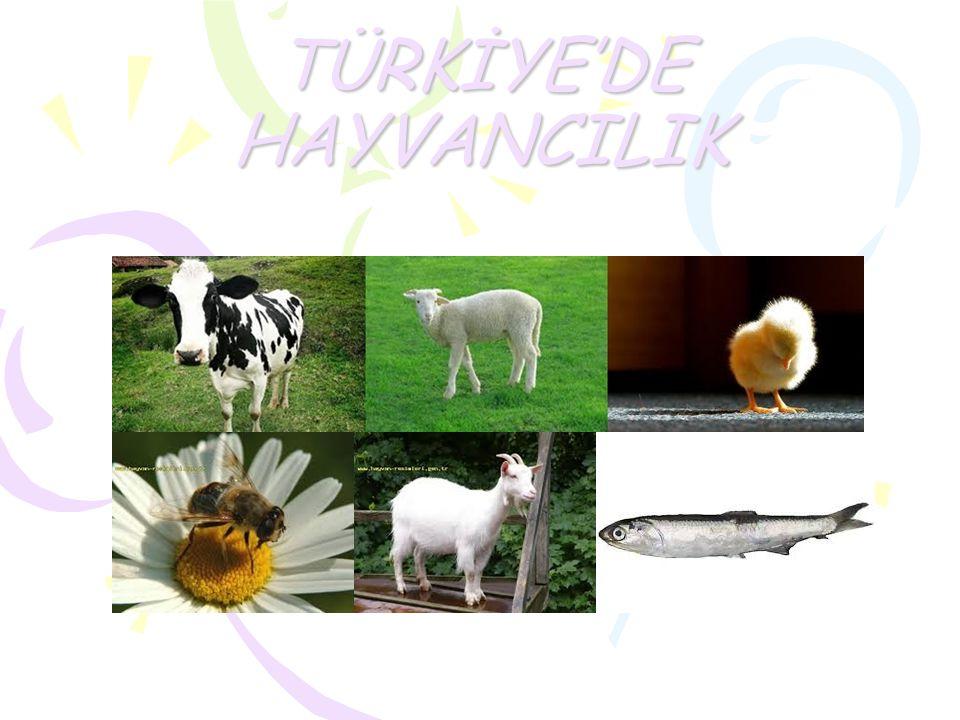 b) Mera Hayvancılığı Yerine Ahır Hayvancılığı Geliştirilmeli Mera hayvancılığı otlaklarda yapılan hayvancılık şeklidir.