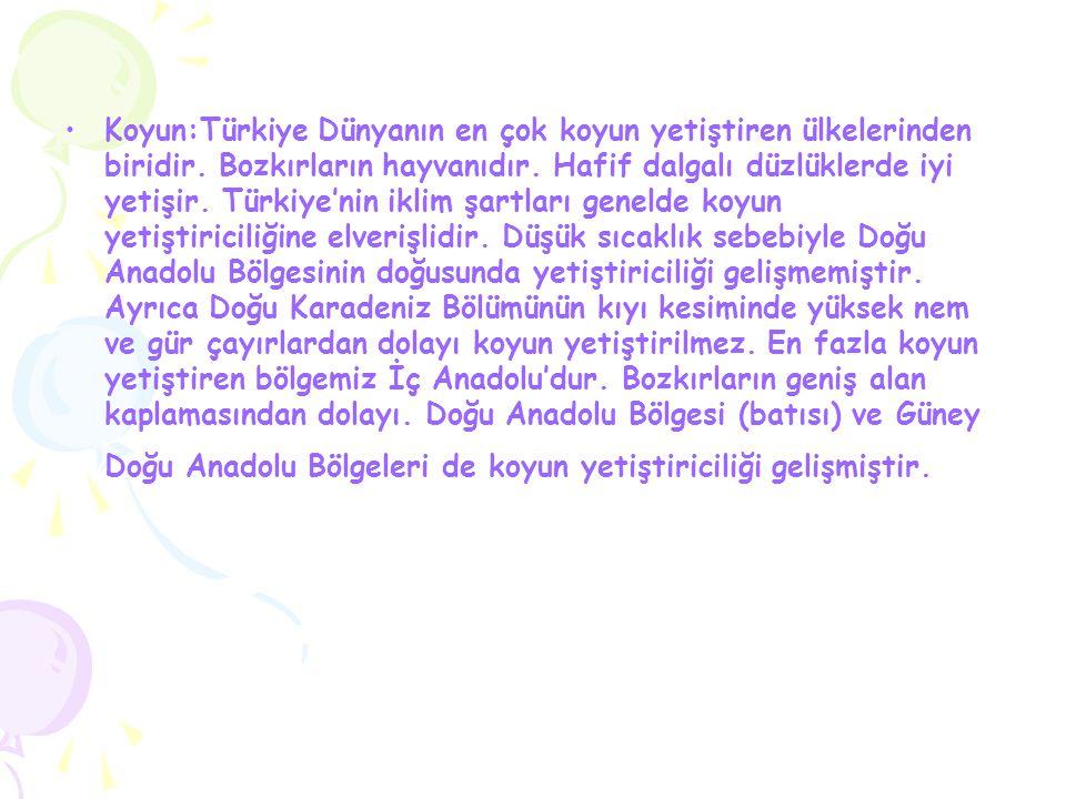 Koyun:Türkiye Dünyanın en çok koyun yetiştiren ülkelerinden biridir. Bozkırların hayvanıdır. Hafif dalgalı düzlüklerde iyi yetişir. Türkiye'nin iklim