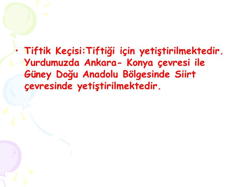 Tiftik Keçisi:Tiftiği için yetiştirilmektedir. Yurdumuzda Ankara- Konya çevresi ile Güney Doğu Anadolu Bölgesinde Siirt çevresinde yetiştirilmektedir.