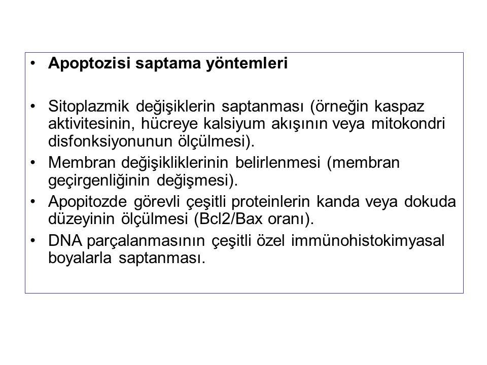 Apoptozisi saptama yöntemleri Sitoplazmik değişiklerin saptanması (örneğin kaspaz aktivitesinin, hücreye kalsiyum akışının veya mitokondri disfonksiyo