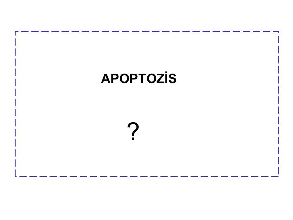 APOPTOZİS ?