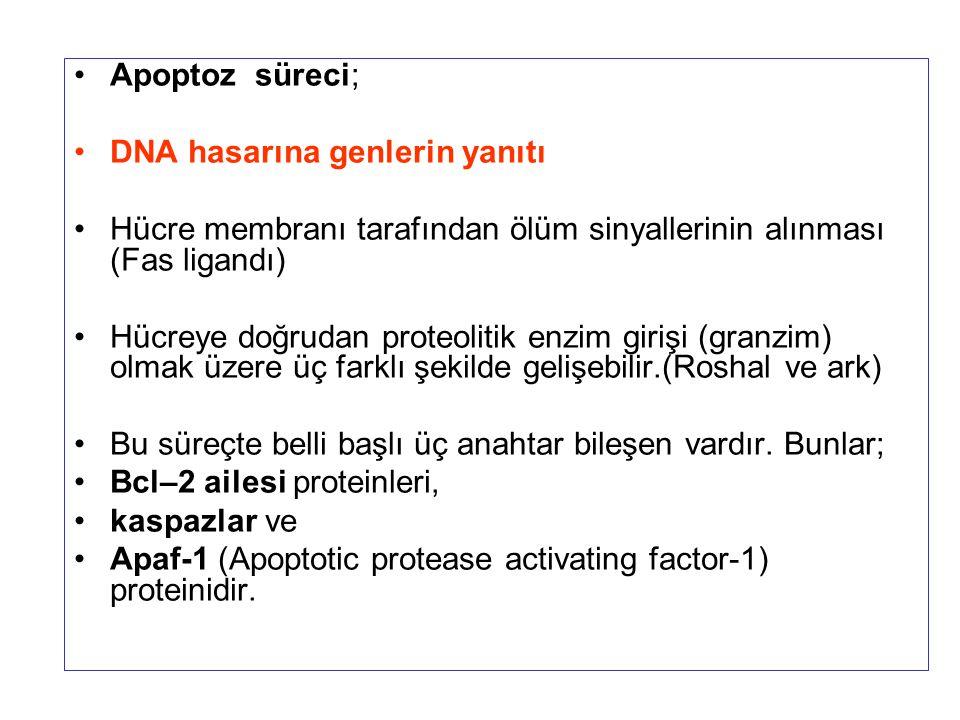 Apoptoz süreci; DNA hasarına genlerin yanıtı Hücre membranı tarafından ölüm sinyallerinin alınması (Fas ligandı) Hücreye doğrudan proteolitik enzim gi