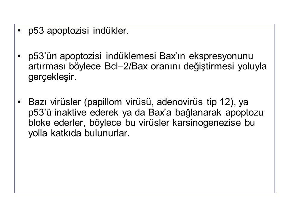 p53 apoptozisi indükler. p53'ün apoptozisi indüklemesi Bax'ın ekspresyonunu artırması böylece Bcl–2/Bax oranını değiştirmesi yoluyla gerçekleşir. Bazı
