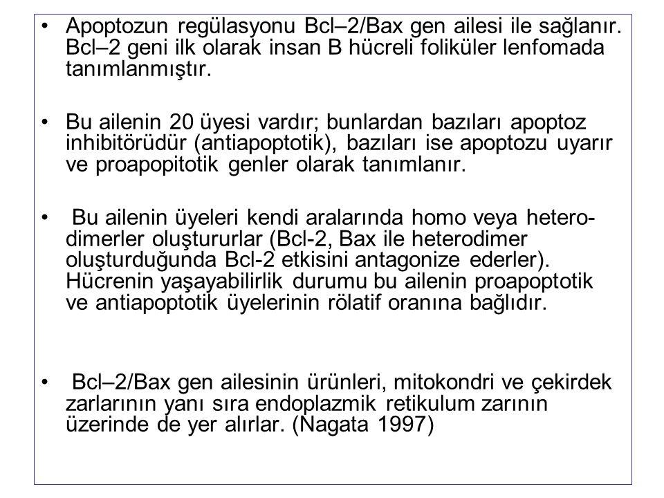 Apoptozun regülasyonu Bcl–2/Bax gen ailesi ile sağlanır. Bcl–2 geni ilk olarak insan B hücreli foliküler lenfomada tanımlanmıştır. Bu ailenin 20 üyesi