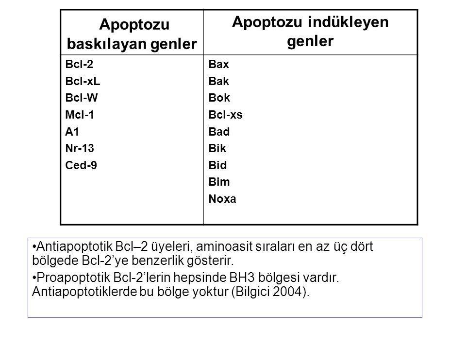 Antiapoptotik Bcl–2 üyeleri, aminoasit sıraları en az üç dört bölgede Bcl-2'ye benzerlik gösterir. Proapoptotik Bcl-2'lerin hepsinde BH3 bölgesi vardı