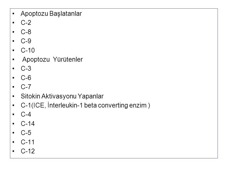 Apoptozu Başlatanlar C-2 C-8 C-9 C-10 Apoptozu Yürütenler C-3 C-6 C-7 Sitokin Aktivasyonu Yapanlar C-1(ICE, İnterleukin-1 beta converting enzim ) C-4