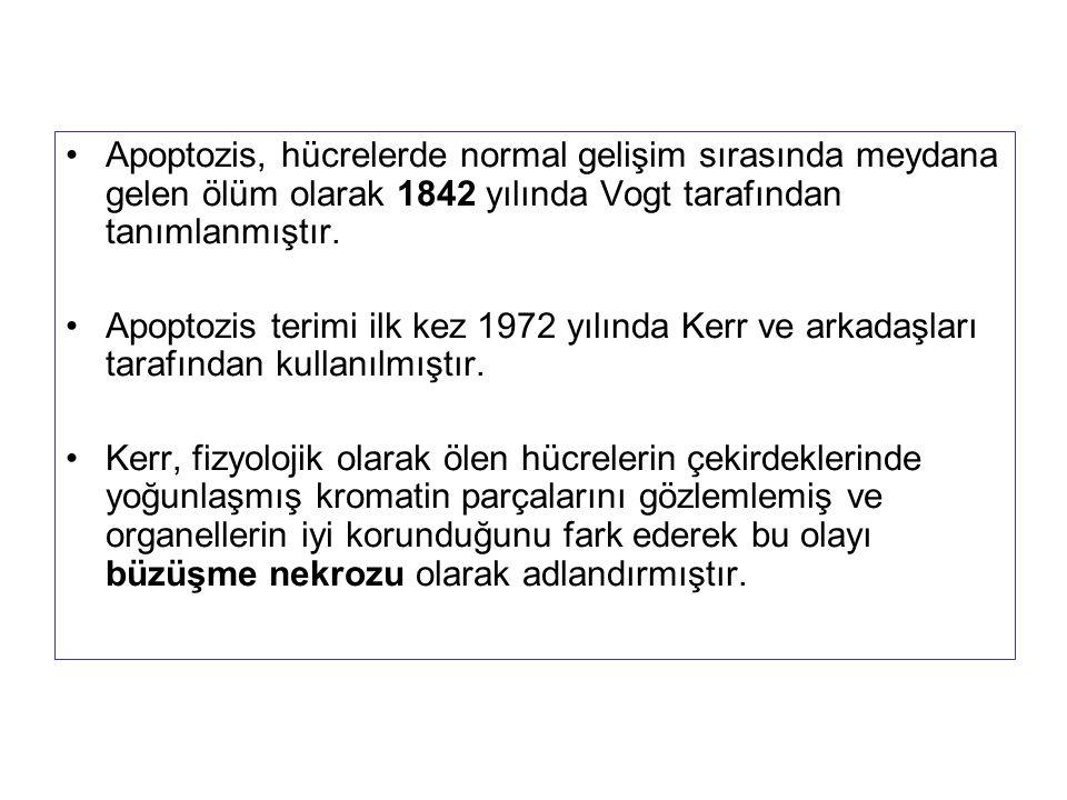 Apoptozis, hücrelerde normal gelişim sırasında meydana gelen ölüm olarak 1842 yılında Vogt tarafından tanımlanmıştır. Apoptozis terimi ilk kez 1972 yı
