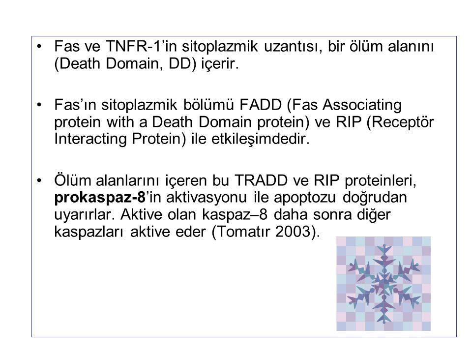 Fas ve TNFR-1'in sitoplazmik uzantısı, bir ölüm alanını (Death Domain, DD) içerir. Fas'ın sitoplazmik bölümü FADD (Fas Associating protein with a Deat