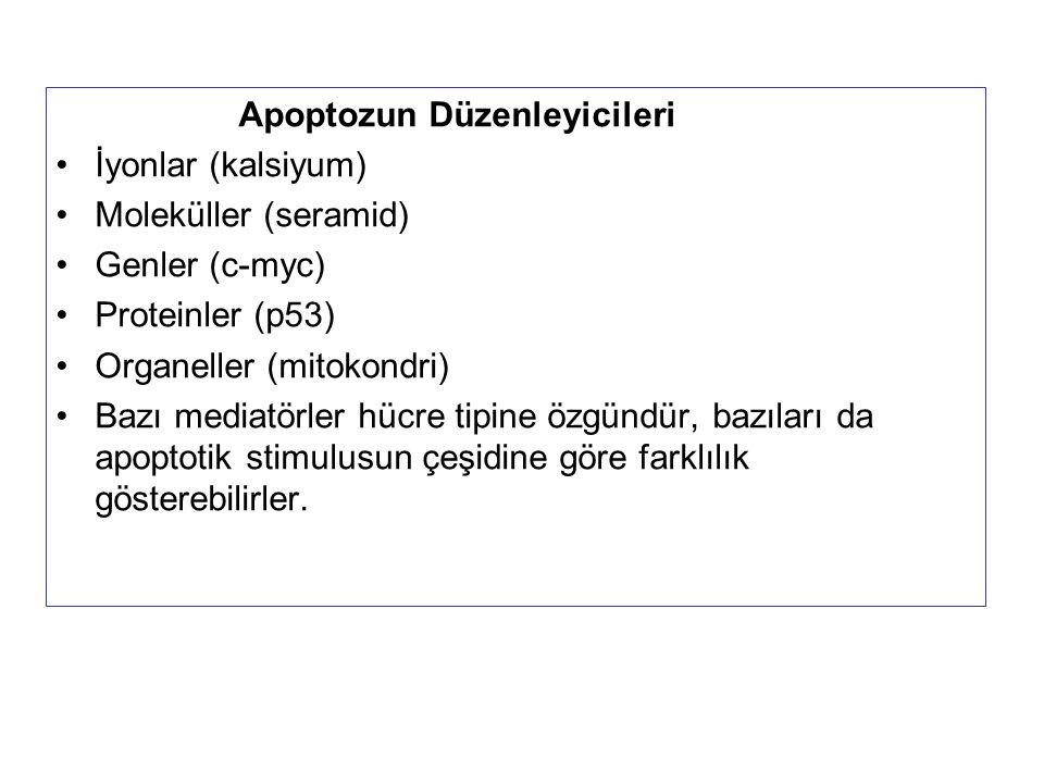 Apoptozun Düzenleyicileri İyonlar (kalsiyum) Moleküller (seramid) Genler (c-myc) Proteinler (p53) Organeller (mitokondri) Bazı mediatörler hücre tipin