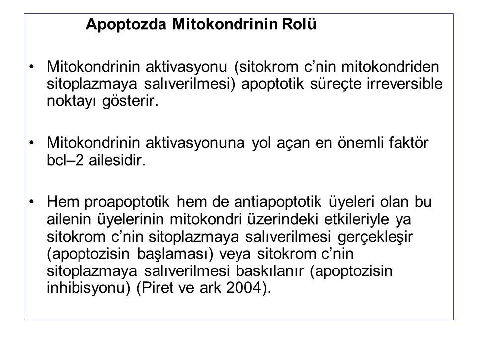 Apoptozda Mitokondrinin Rolü Mitokondrinin aktivasyonu (sitokrom c'nin mitokondriden sitoplazmaya salıverilmesi) apoptotik süreçte irreversible noktay