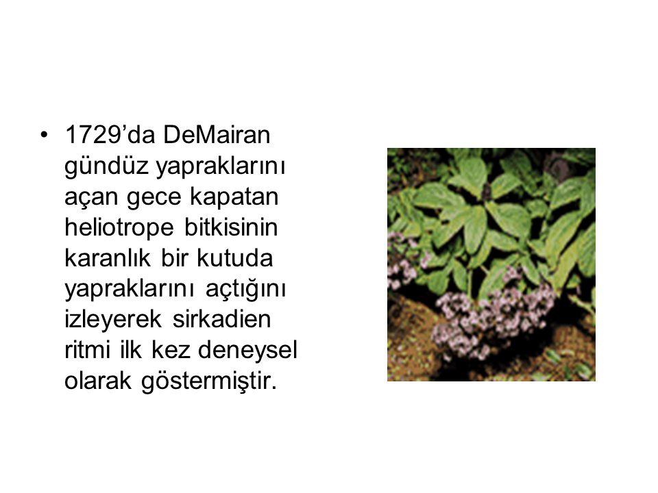 1729'da DeMairan gündüz yapraklarını açan gece kapatan heliotrope bitkisinin karanlık bir kutuda yapraklarını açtığını izleyerek sirkadien ritmi ilk k