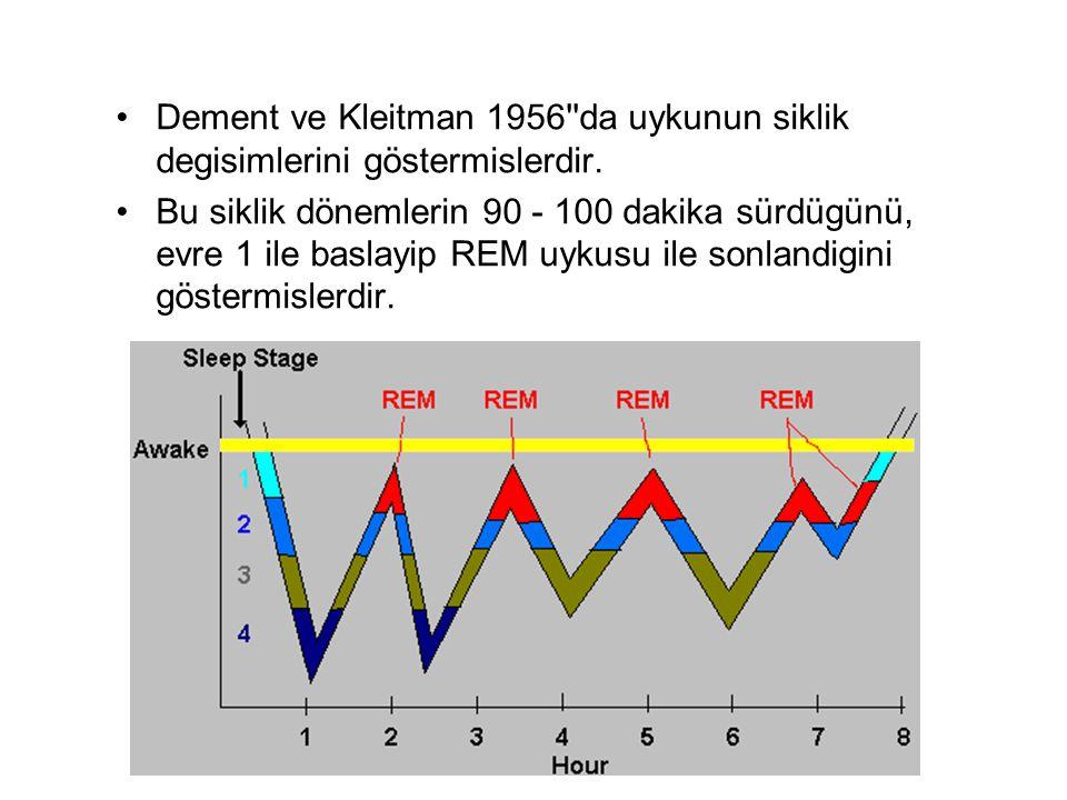Dement ve Kleitman 1956''da uykunun siklik degisimlerini göstermislerdir. Bu siklik dönemlerin 90 - 100 dakika sürdügünü, evre 1 ile baslayip REM uyku