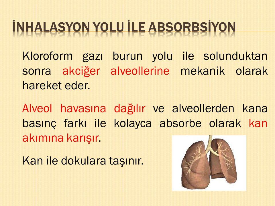 Kloroform gazı burun yolu ile solunduktan sonra akciğer alveollerine mekanik olarak hareket eder. Alveol havasına dağılır ve alveollerden kana basınç