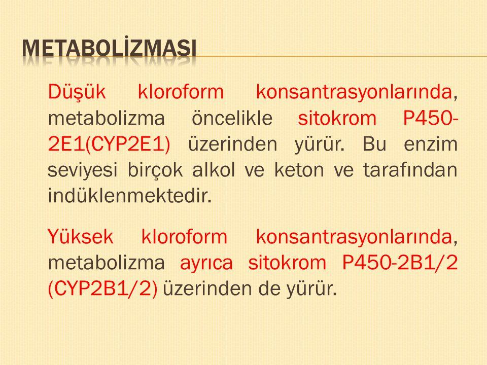 Düşük kloroform konsantrasyonlarında, metabolizma öncelikle sitokrom P450- 2E1(CYP2E1) üzerinden yürür. Bu enzim seviyesi birçok alkol ve keton ve tar