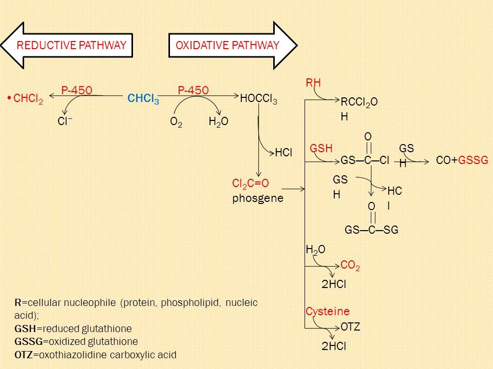 REDUCTIVE PATHWAYOXIDATIVE PATHWAY CHCl 3 HOCCl 3 P-450 H2OH2OO2O2 Cl − CHCl 2 HCl Cl 2 C=O phosgene RCCl 2 O H GS―C―Cl O CO+GSSG RH GSH HC l O GS―C―S