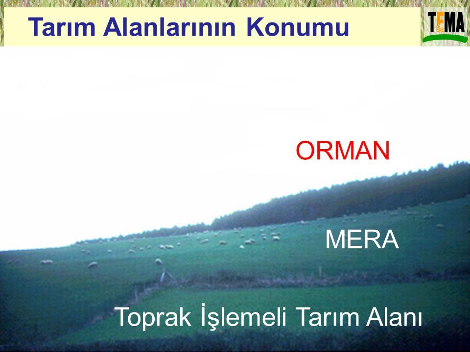 ORMAN MERA Toprak İşlemeli Tarım Alanı Tarım Alanlarının Konumu