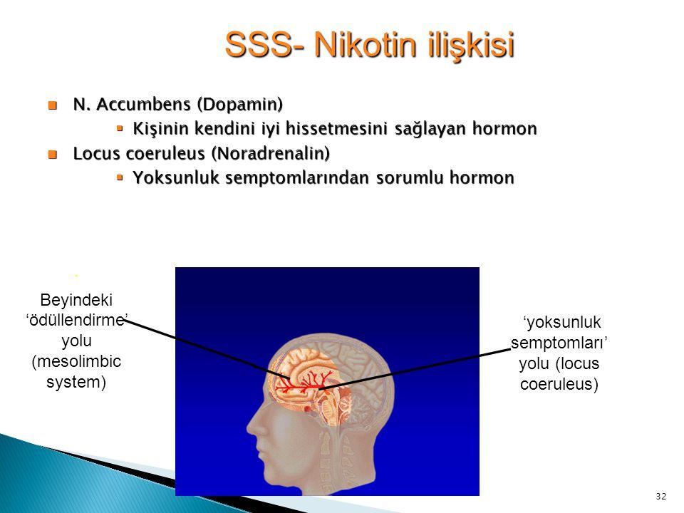 32 SSS- Nikotin ilişkisi N. Accumbens (Dopamin) N. Accumbens (Dopamin)  Kişinin kendini iyi hissetmesini sağlayan hormon Locus coeruleus (Noradrenali