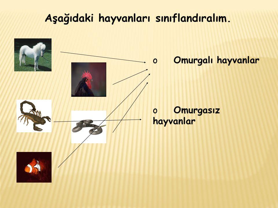 Aşağıdaki hayvanları sınıflandıralım. o Omurgalı hayvanlar o Omurgasız hayvanlar