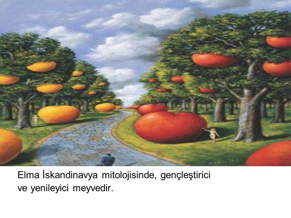 Elma İskandinavya mitolojisinde, gençleştirici ve yenileyici meyvedir.