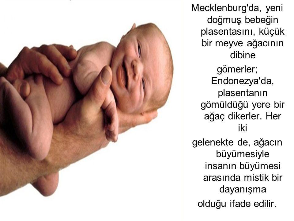 Mecklenburg'da, yeni doğmuş bebeğin plasentasını, küçük bir meyve ağacının dibine gömerler; Endonezya'da, plasentanın gömüldüğü yere bir ağaç dikerler
