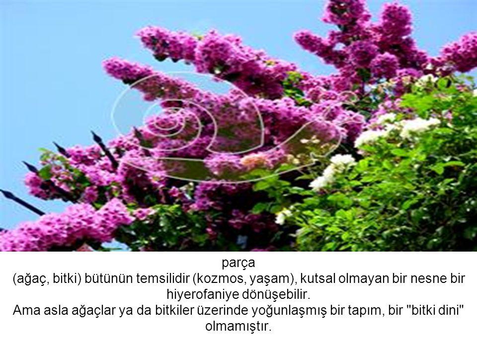 parça (ağaç, bitki) bütünün temsilidir (kozmos, yaşam), kutsal olmayan bir nesne bir hiyerofaniye dönüşebilir. Ama asla ağaçlar ya da bitkiler üzerind