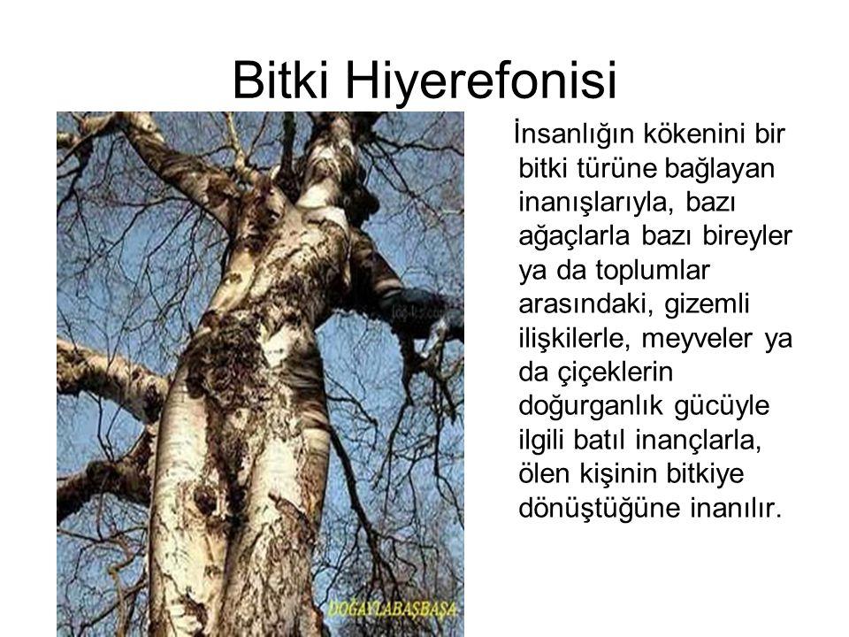 Bitki Hiyerefonisi İnsanlığın kökenini bir bitki türüne bağlayan inanışlarıyla, bazı ağaçlarla bazı bireyler ya da toplumlar arasındaki, gizemli ilişk