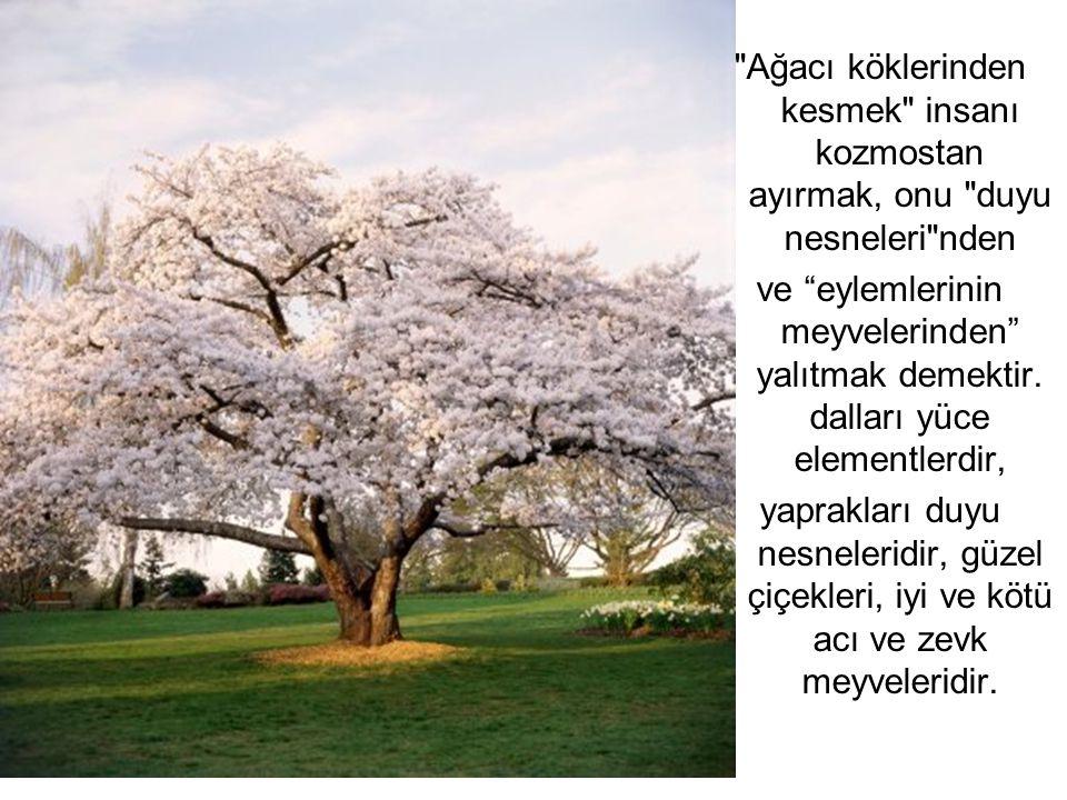 Ağacı köklerinden kesmek insanı kozmostan ayırmak, onu duyu nesneleri nden ve eylemlerinin meyvelerinden yalıtmak demektir.