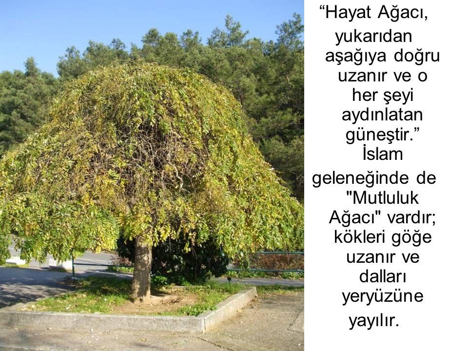 """""""Hayat Ağacı, yukarıdan aşağıya doğru uzanır ve o her şeyi aydınlatan güneştir."""" İslam geleneğinde de"""