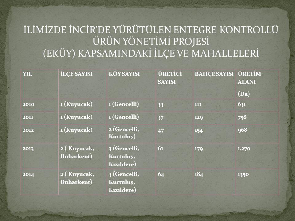 İLİMİZDE İNCİR'DE YÜRÜTÜLEN ENTEGRE KONTROLLÜ ÜRÜN YÖNETİMİ PROJESİ (EKÜY) KAPSAMINDAKİ İLÇE VE MAHALLELERİ YILİLÇE SAYISIKÖY SAYISI ÜRETİCİ SAYISI BAHÇE SAYISI ÜRETİM ALANI (Da) 20101 (Kuyucak)1 (Gencelli)33111631 20111 (Kuyucak)1 (Gencelli)37129758 20121 (Kuyucak) 2 (Gencelli, Kurtuluş) 47154968 2013 2 ( Kuyucak, Buharkent) 3 (Gencelli, Kurtuluş, Kızıldere) 611791.270 20142 ( Kuyucak, Buharkent) 3 (Gencelli, Kurtuluş, Kızıldere) 641841350