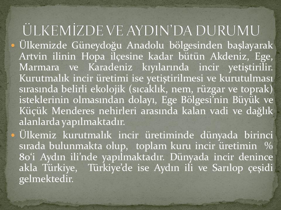 Ülkemizde Güneydoğu Anadolu bölgesinden başlayarak Artvin ilinin Hopa ilçesine kadar bütün Akdeniz, Ege, Marmara ve Karadeniz kıyılarında incir yetiştirilir.