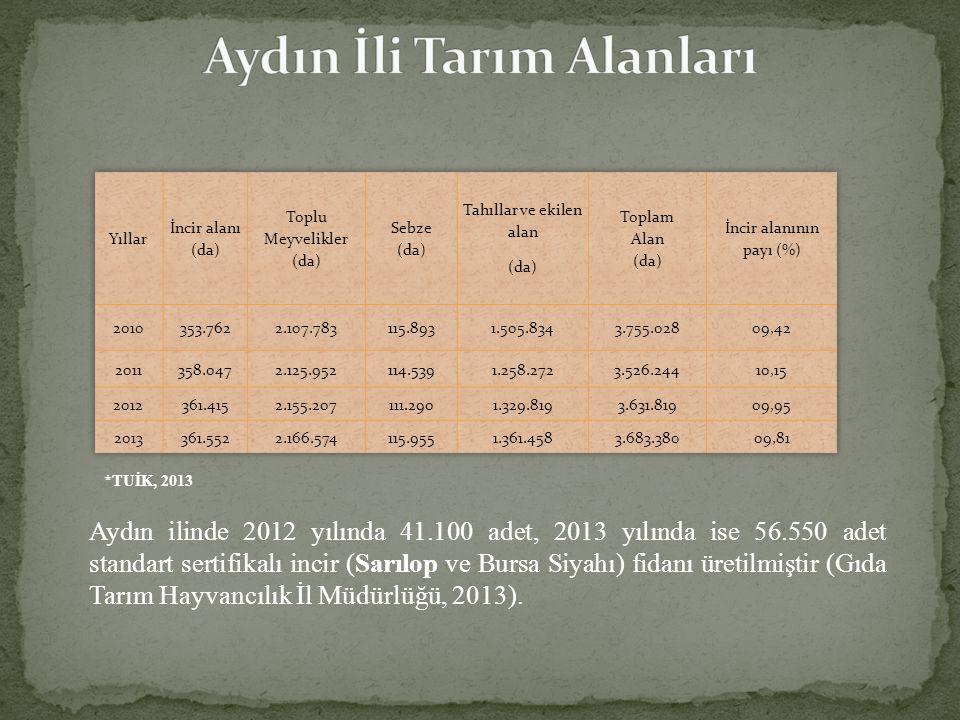 Aydın ilinde 2012 yılında 41.100 adet, 2013 yılında ise 56.550 adet standart sertifikalı incir (Sarılop ve Bursa Siyahı) fidanı üretilmiştir (Gıda Tarım Hayvancılık İl Müdürlüğü, 2013).