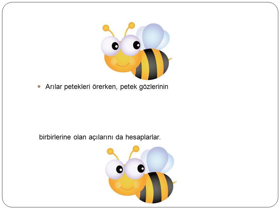 Arılar petekleri örerken, petek gözlerinin birbirlerine olan açılarını da hesaplarlar.