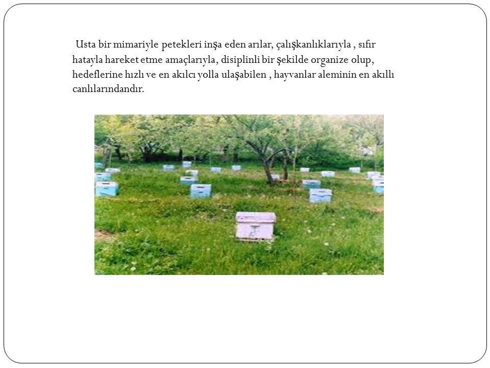 Usta bir mimariyle petekleri in ş a eden arılar, çalı ş kanlıklarıyla, sıfır hatayla hareket etme amaçlarıyla, disiplinli bir ş ekilde organize olup,