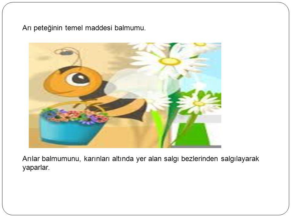 Arı peteğinin temel maddesi balmumu. Arılar balmumunu, karınları altında yer alan salgı bezlerinden salgılayarak yaparlar.