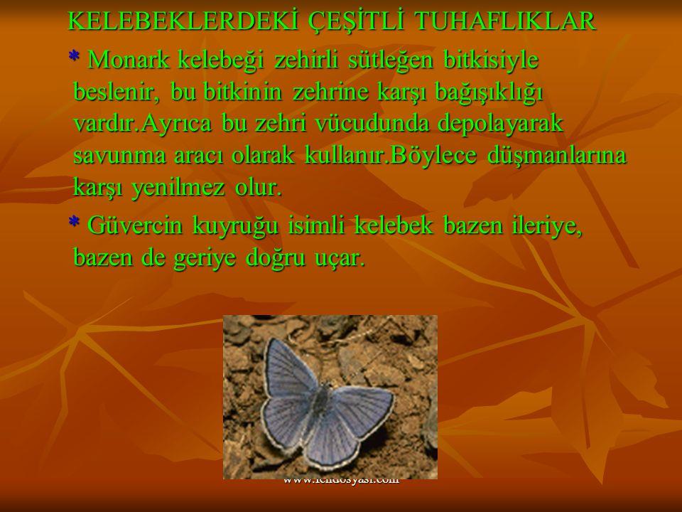 www.fendosyasi.com KELEBEKLERDEKİ ÇEŞİTLİ TUHAFLIKLAR KELEBEKLERDEKİ ÇEŞİTLİ TUHAFLIKLAR * Monark kelebeği zehirli sütleğen bitkisiyle beslenir, bu bitkinin zehrine karşı bağışıklığı vardır.Ayrıca bu zehri vücudunda depolayarak savunma aracı olarak kullanır.Böylece düşmanlarına karşı yenilmez olur.