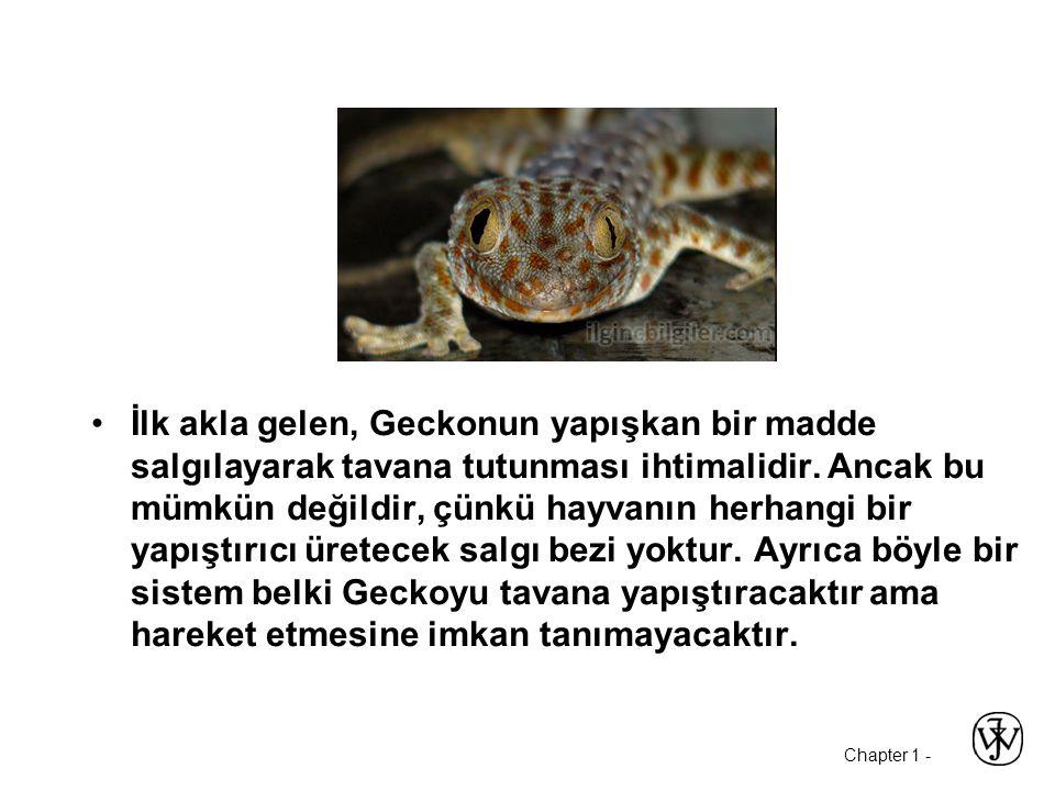 Chapter 1 - İlk akla gelen, Geckonun yapışkan bir madde salgılayarak tavana tutunması ihtimalidir. Ancak bu mümkün değildir, çünkü hayvanın herhangi b