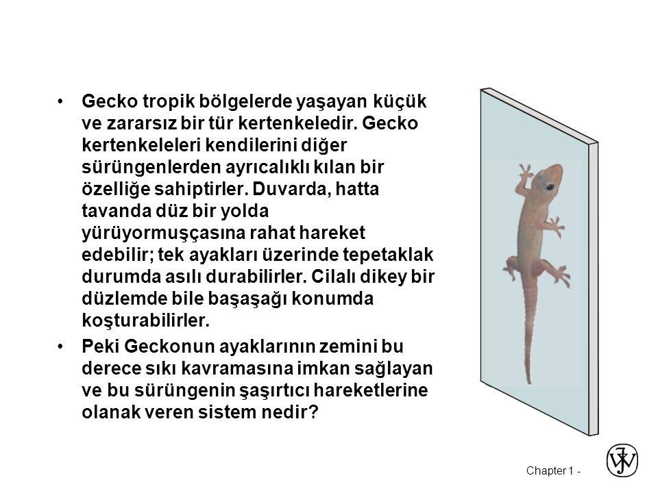Chapter 1 - Gecko tropik bölgelerde yaşayan küçük ve zararsız bir tür kertenkeledir. Gecko kertenkeleleri kendilerini diğer sürüngenlerden ayrıcalıklı
