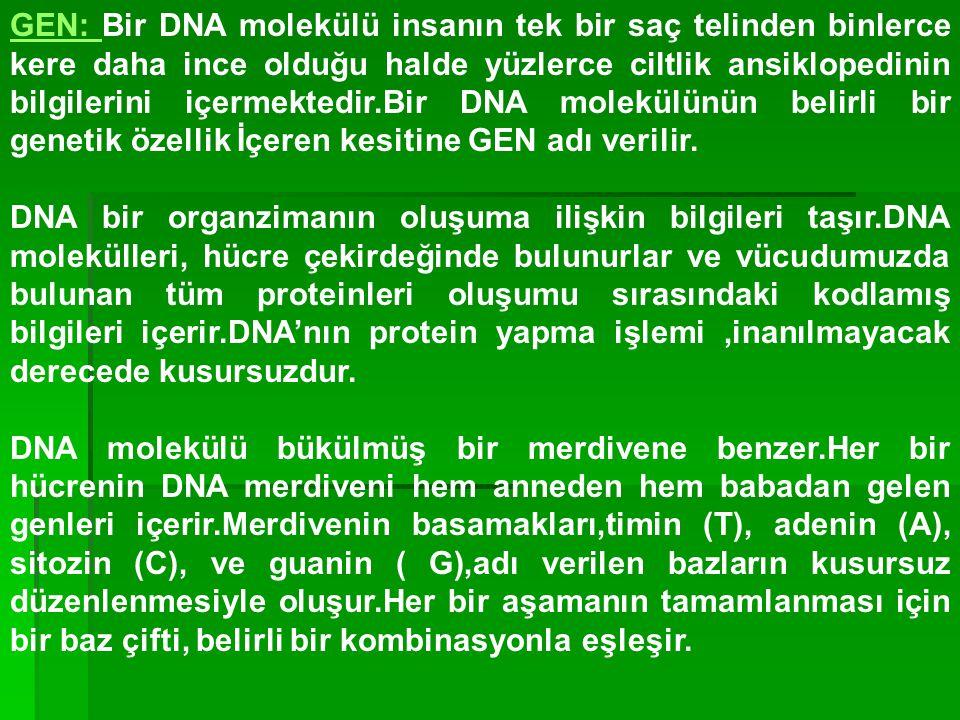GEN: Bir DNA molekülü insanın tek bir saç telinden binlerce kere daha ince olduğu halde yüzlerce ciltlik ansiklopedinin bilgilerini içermektedir.Bir D