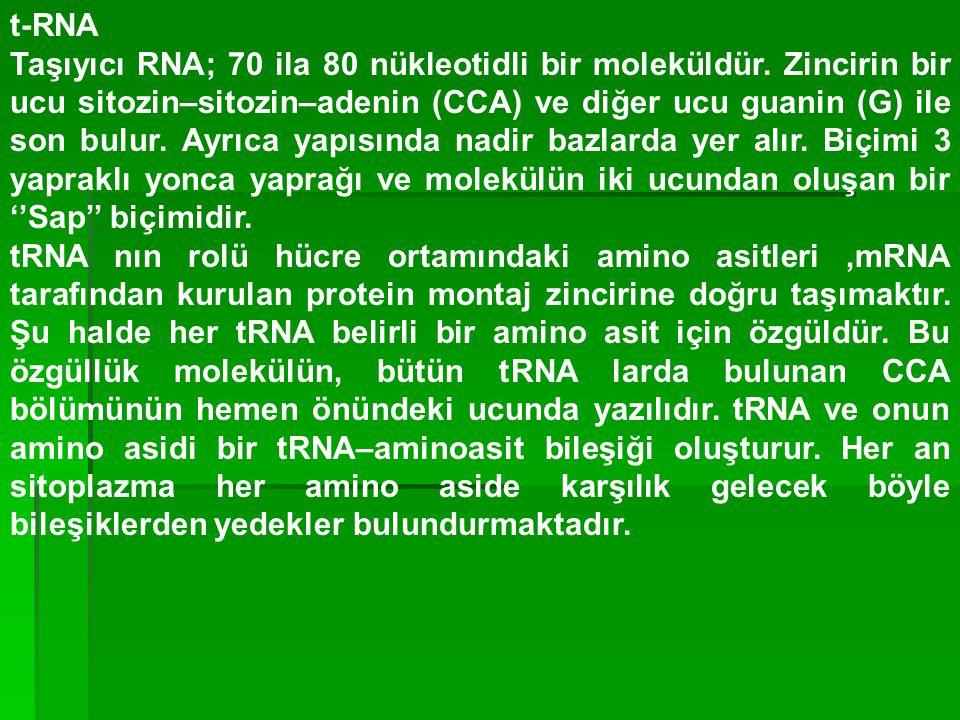 t-RNA Taşıyıcı RNA; 70 ila 80 nükleotidli bir moleküldür. Zincirin bir ucu sitozin–sitozin–adenin (CCA) ve diğer ucu guanin (G) ile son bulur. Ayrıca