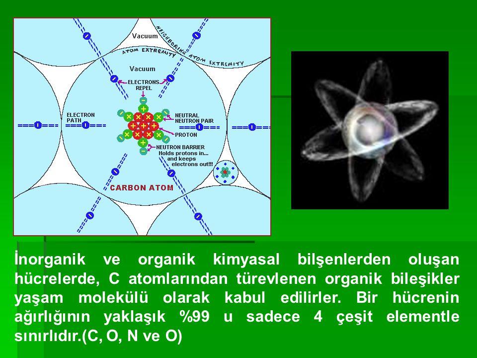Hücreyi oluşturan temel organik moleküller başlıca iki grupta toplanabilir.